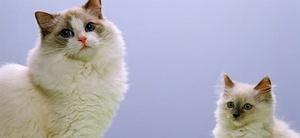 Trennungsstreit um gemeinsame Haustiere