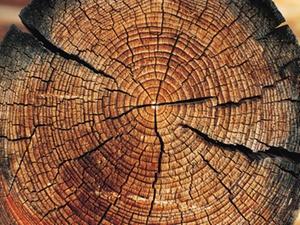 Termin Wohnungswirtschaft: Effizientes Bauen Holz urbaner Raum