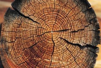 BMF: Steuerliche Regelungen des Forstschäden-Ausgleichsgesetzes
