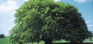 Baumfällung als bauliche Veränderung