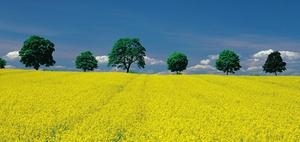 Betriebszerschlagung: Übertragung landwirtschaftlicher Flächen