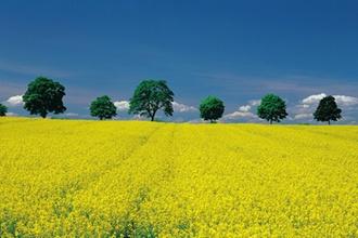 FG Münster: Betriebszerschlagung bei Übertragung landwirtschaftlicher Flächen