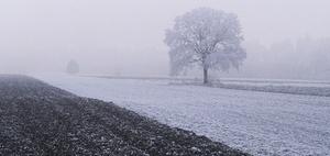 Unterstützung bei der Bewältigung von Frostschäden