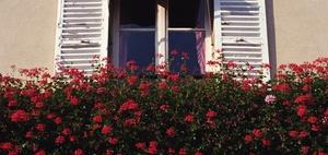 Blumenkästen an Balkonaußenseite können verboten werden