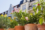 Balkon Pflanzen Blick auf Altbau-Wohnungen