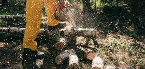 Baumfällung: Holzfällerlohn gehört nicht zu den Betriebskosten