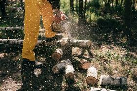 Baumfällen Holzfäller