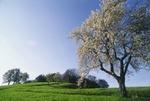 Bluehender Baum im Fruehling