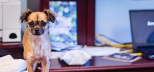 Internationaler Tag des Bürohundes: Hunde machen glücklich