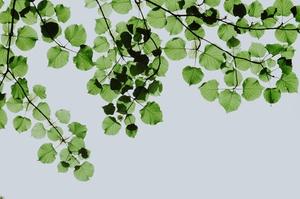 Corona, Nachhaltigkeit und Steuerkanzleien