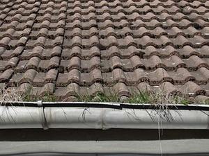 Mietrecht: Verstopfte Dachrinne im Sommer: Vermieter haftet nicht