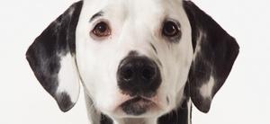 Außendienst: Vorsicht bissiger Hund!