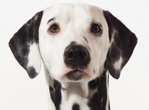 BGH: Verbot von Hunde- und Katzenhaltung unzulässig