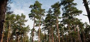 Nachhaltigkeit: Wenn Wohnungsunternehmen Waldbesitzer werden