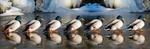 Enten auf Glatteis