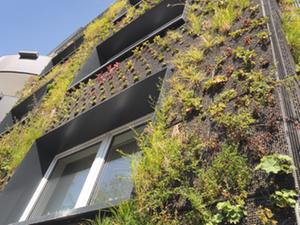 Fassadengarten an vermietetem Mehrfamilienhaus in Hannover