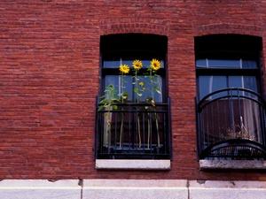 Verwitterte Fenster sind kein Mangel