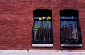 Fenster mit Sonnenblumen