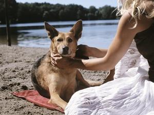 BayVGH Mitteilung: Hundesteuer auch im Urlaub