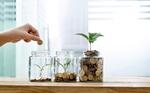 Frau wirft Münze in Glasspardose mit Pflanze