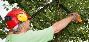Neue Branchenregel für mehr Sicherheit bei der Baumpflege
