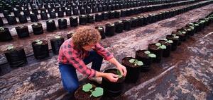BMF: Bewertung mehrjähriger Kulturen in Baumschulbetrieben