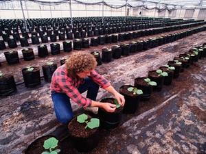 Sozialversicherung: Neuer Landwirtschaftlicher Sozialversicherung
