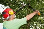 Gaertner mit Baumschere