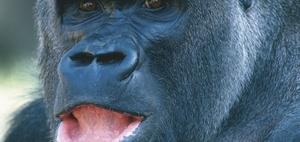 Dieselskandal und kein Ende - Versuche an Menschen und Affen