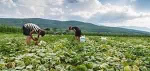 Ausländische Saisonarbeiter: Lohnsteuer