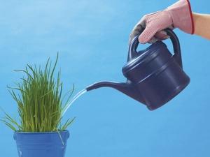 Pflanzen im Büro - welche positiven Effekte haben sie?