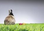 Hase sitzt neben Eiern auf Rasen