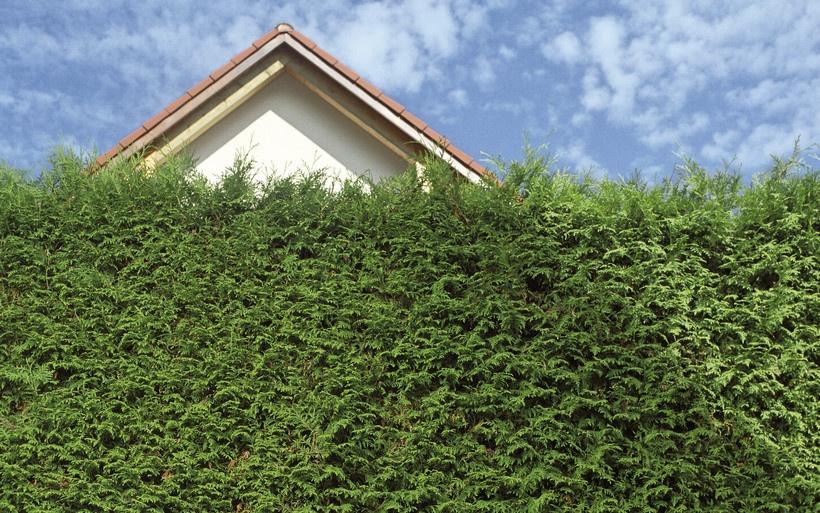 Hecke Muss Nicht Auf Verdacht Gekürzt Werden Immobilien Haufe