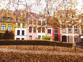Herbst Blätter Laub Häuser