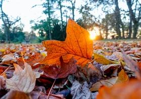 Farbiges Herbstlaub, Nahaufnahme