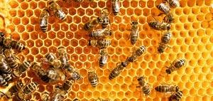 EuG bestätigt EU-Verordnung gegen 3 Pestizide wegen Bienensterben
