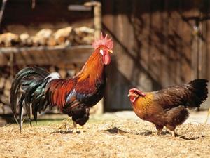 Dioxin-Verdacht bei Tierfutter - Haftung des Verkäufers