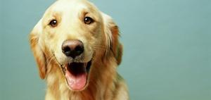 Verwirrender Versicherungsfall: Hund klaut menschliches Gebiss