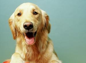 Hunde als Scheidungsopfer