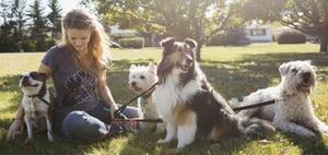 Steuervorteil Haustier - Gassi gehen lassen und Steuern sparen