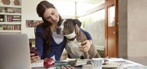 Auf den Hund gekommen: Dürfen Haustiere an den Arbeitsplatz?