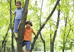 Jungen Kinder Baum