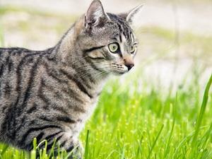 Wohnungseigentümer darf keine Tiere anlocken