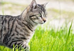 Katze laeuft in Wiese