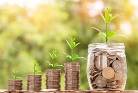 Keim Pflanze wächst in Geld