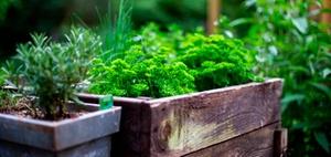 Mehr als Gemüsebeet und Gesundheitsförderung: Office Gardening