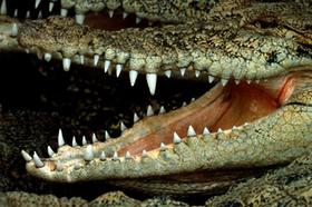 Krokodol