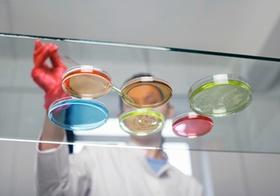Laborant mit Petrischalen