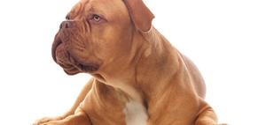 Dauer-Unterbringung eines Problemhundes: Kein Spendenabzug