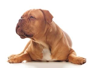 BGH: Mieter darf großen Hund halten